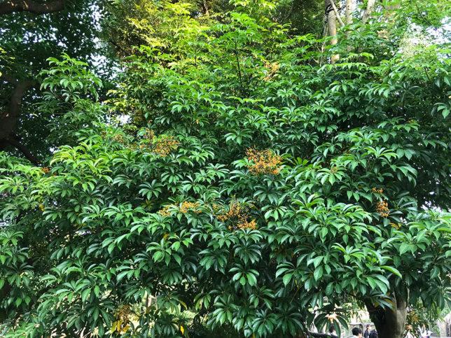 ディズニーシーで見た植物