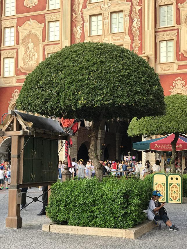 丸く剪定された木